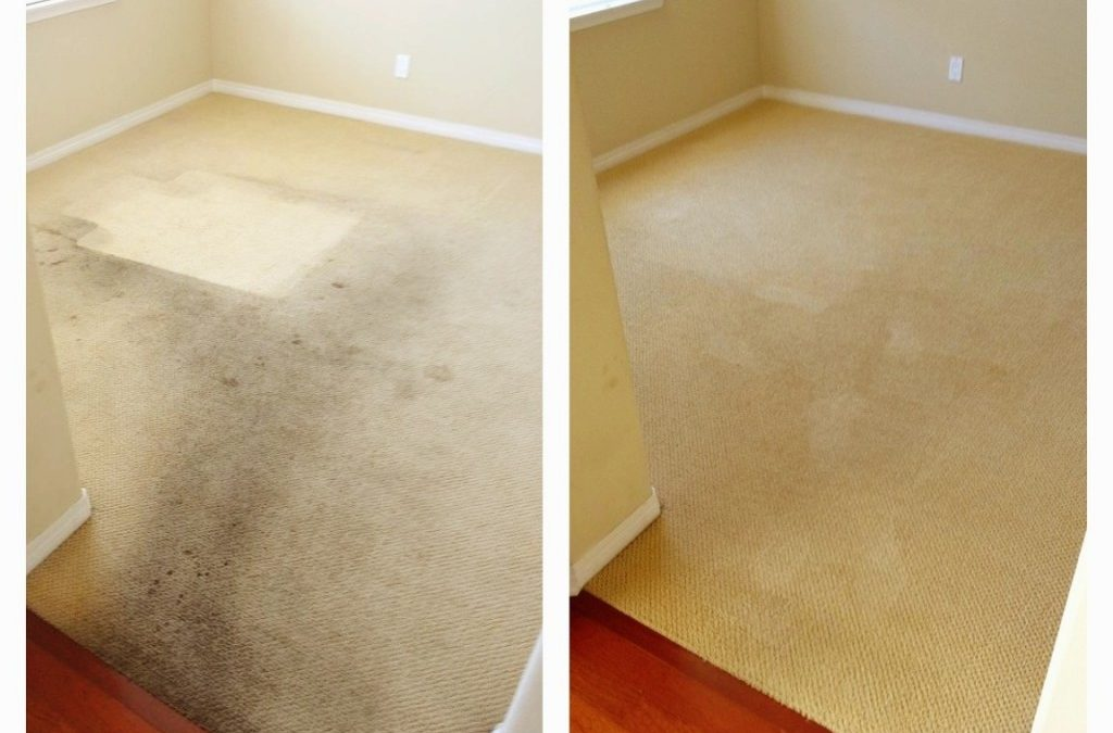 how to choose a professional carpet cleaner